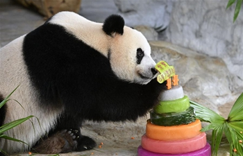 Giant pandas Gong Gong, Shun Shun celebrate 6th birthday in Haikou