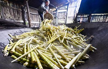In pics: bamboo shoots collectors in China's Chongqing