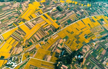 Aerial view of rice fields in China's Hebei