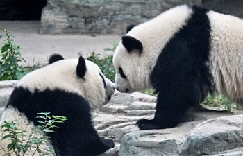 Giant panda twins debut in Beijing