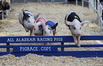 In pics: piggy hurdle racing at Original Farmers Market Fall Festival