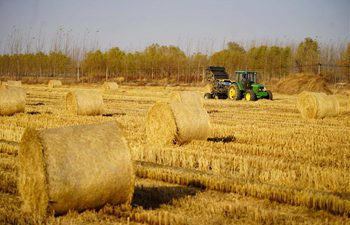 Farmers pack straw in field in north China's Hebei