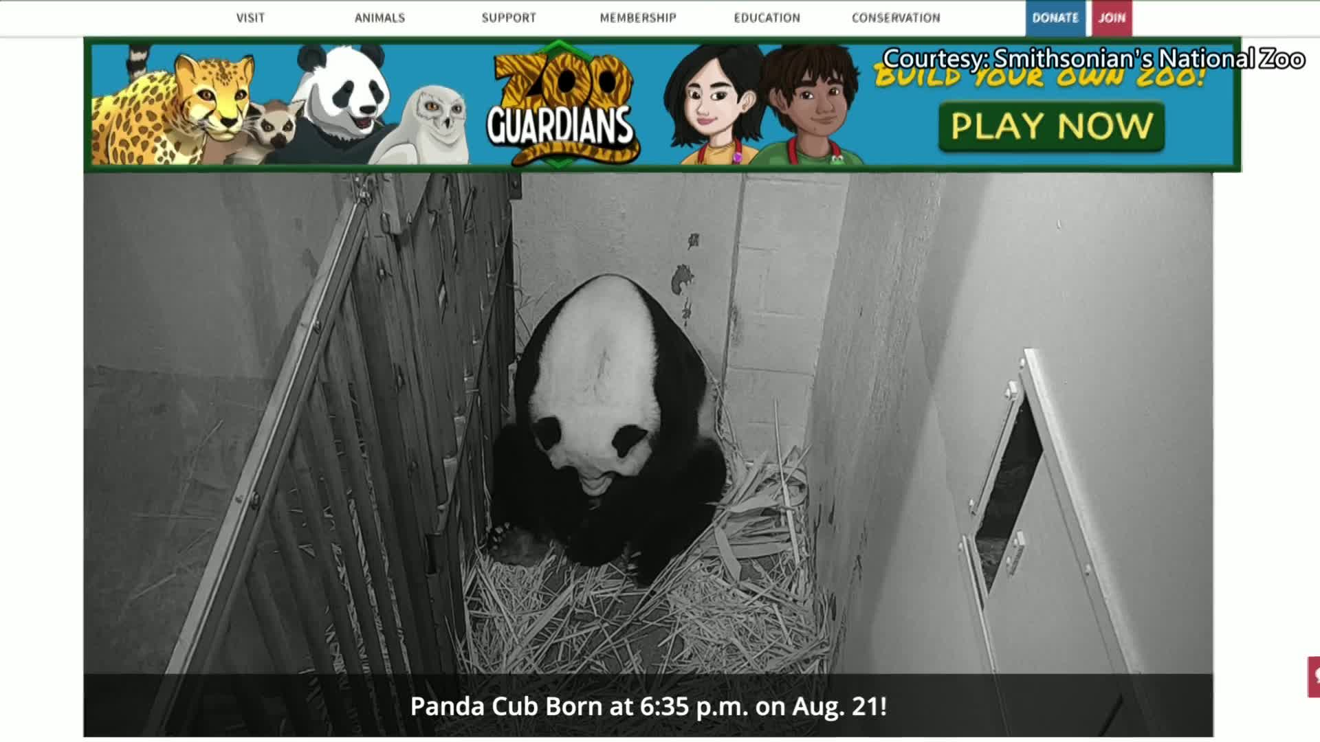 Giant panda Mei Xiang gives birth to cub at U.S. zoo
