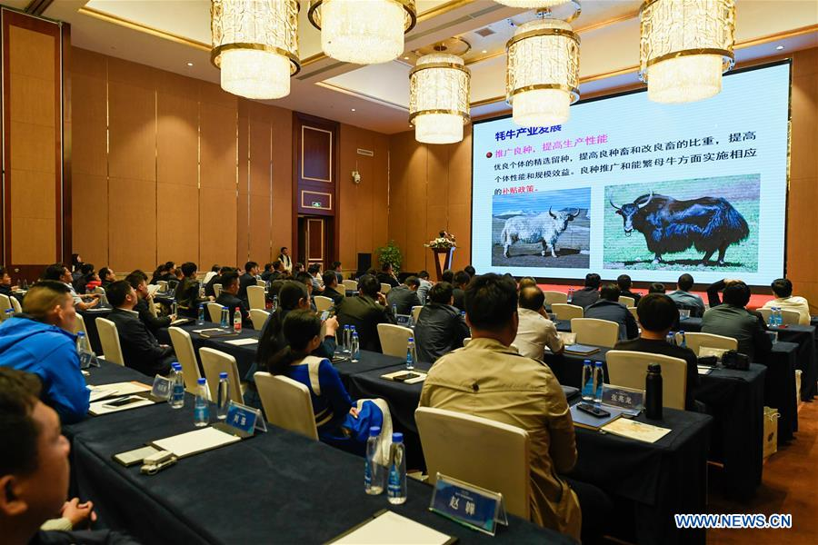 CHINA-LHASA-YAK INDUSTRY-FORUM-OPEN (CN)