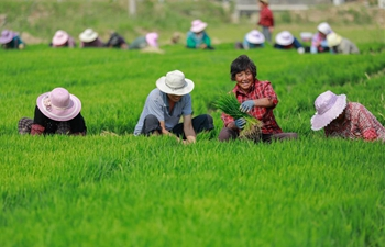 Farmers work in fields across China on day of summer solstice