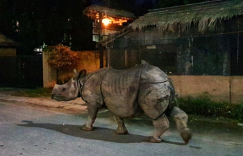 In pics: one-horned rhino walks in tourism hub in SW Nepal