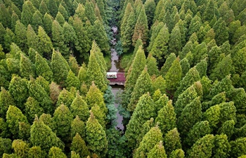 Scenery of forest park in east China's Jiangsu