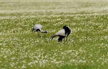Scenery of prairie in Urad Zhongqi, N China's Inner Mongolia
