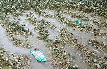 Lotus roots harvested in Jianbei Village, E China's Jiangsu