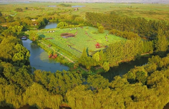 Early autumn scenery of Hongze Lake wetland in east China