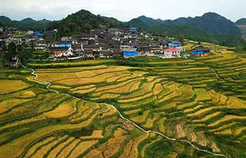View of paddy rice field across China