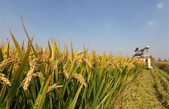 Tancheng County of E China's Shandong witnesses bumper harvest