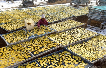 Farmers dry sliced sweet potatoes in Shuiquan Township, China's Shandong