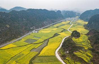 In pics: fields of cole flowers in Liupanshui, SW China's Guizhou
