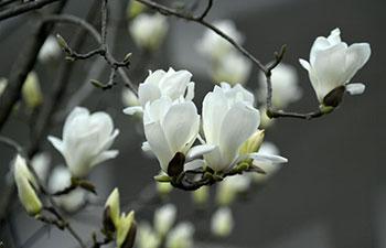 Flowers bloom across China