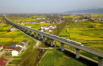 Bullet trains run through cole flower fields in China