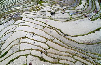 Farmers working in Longji terraced fields in south China's Guangxi