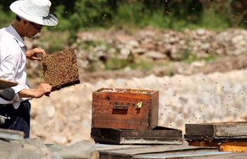 Farmers busy collecting honey in north China's Hebei