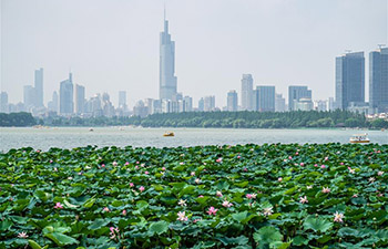 Lotus flowers at Xuanwu Lake Park in Nanjing, China's Jiangsu