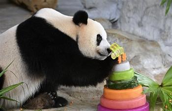 Giant pandas Gong Gong, Shun Shun celebrate 6th birthday in Haikou