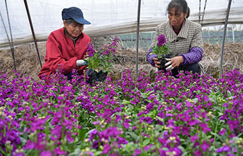 Flower planting helps increase farmers' incomes in China's Nanchang