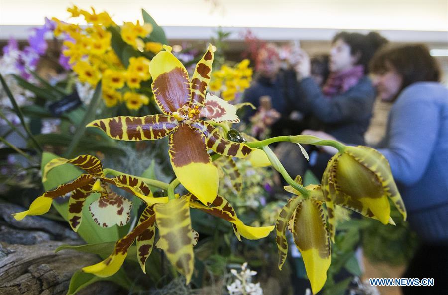 Orchid Show Held At Toronto Botanical Garden Xinhua English