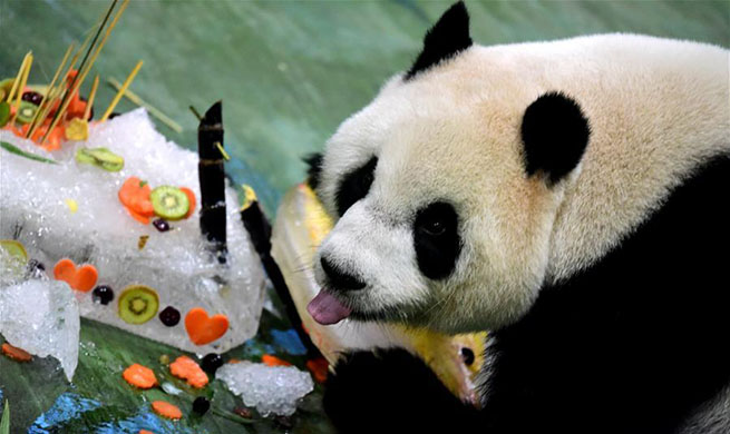 "Giant panda ""Yuanzai"" celebrates 6th birthday in China's Taiwan"