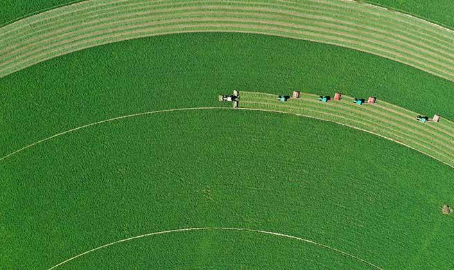 Chinese farmers' harvest festival falls on Autumn Equinox