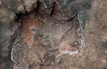 Early Jurassic dinosaur footprints discovered in Guizhou