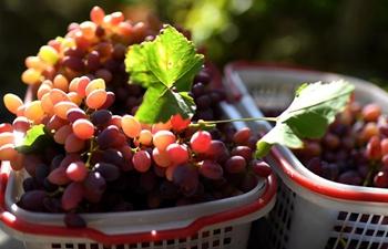 Xinjiang: city famous for bounty of fruits