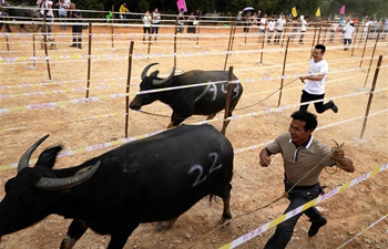 """Cattle festival"" held in E China's Jiangxi"