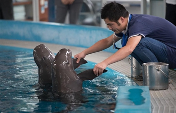 Second artificial-bred Yangtze finless porpoise in good health
