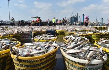 Fishermen work at Xiangzhi fishing port in Shishi, SE China's Fujian