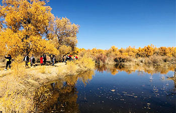 Autumn scenery of populus euphratica forest in China's Gansu