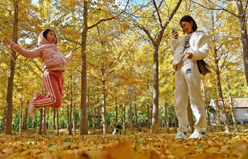 Tourists play with ginkgo leaves in east China's Shandong
