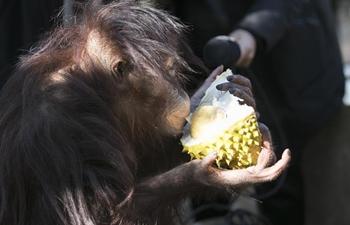 Animals enjoy tropical fruits at Yunnan Wild Animal Park
