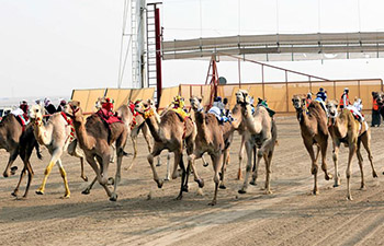 19th Camel Racing Tournament held in Kuwait