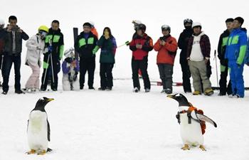 Visitors look at penguins at indoor ski arena in NE China's Harbin