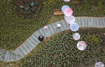 In pics: blooming tulips in NW China's Gansu