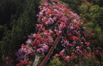 Scenery of azaleas at Tianxia scenic spot in China's Anhui
