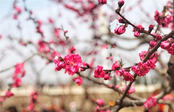 Peach flower festival attracts visitors in Pinggu District, Beijing