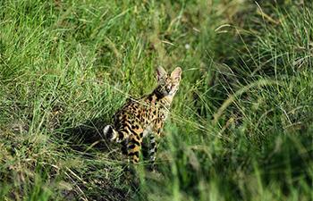 In pics: Maasai Mara National Reserve in Kenya