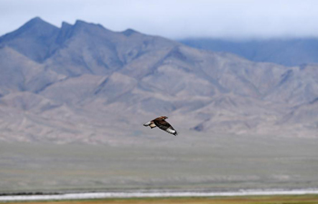 In pics: wildlife in the west of China's Qilian Mountain