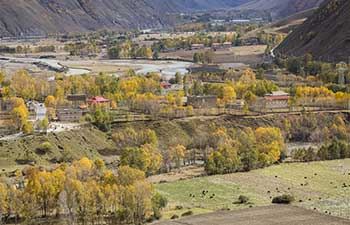 Autumn scenery of Xinduqiao Town in Kangding, China's Sichuan