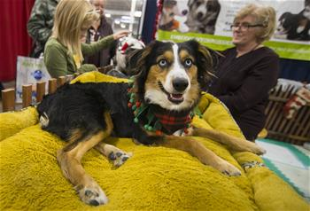 2019 Toronto Christmas Pet Show held in Canada