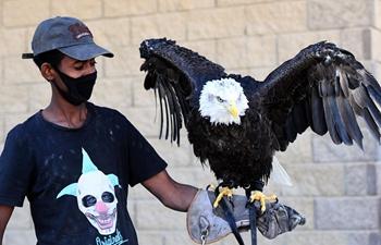 Raptor show held in Kuwait