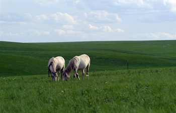 Scenery of Inner Mongolia