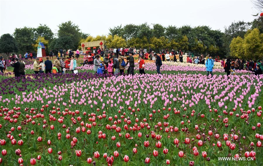 Tourists view tulip flowers during the week-long Spring Festival holiday at Liuzhou Expo Garden in Liuzhou City, south China's Guangxi Zhuang Autonomous Region, Feb. 2, 2017. (Xinhua/Li Bin)