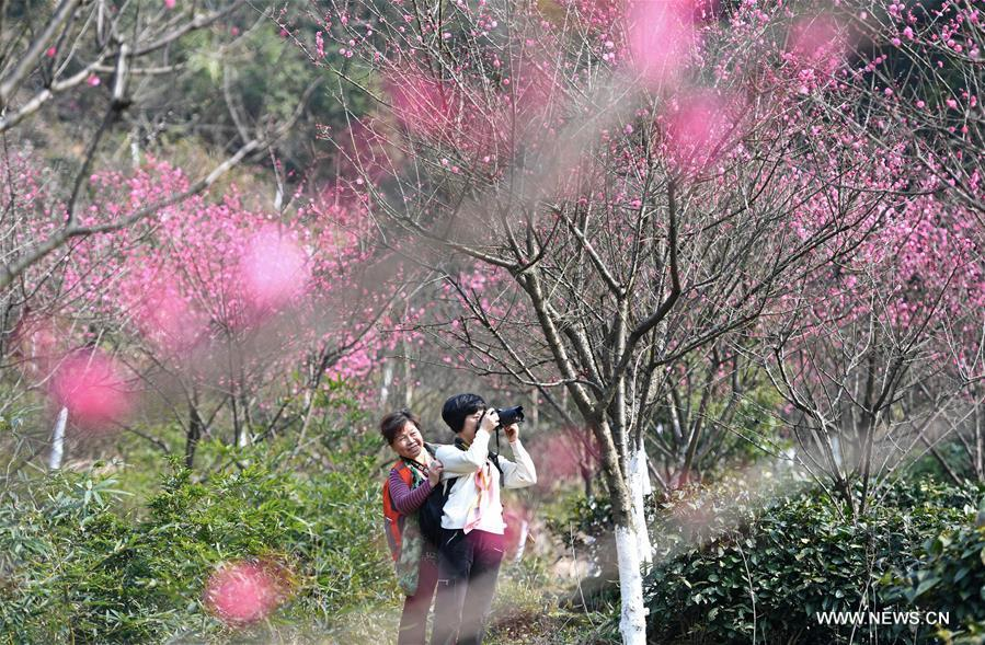 Tourists view plum blossoms at Taiyanggu scenic spot in Nanchang, capital of east China's Jiangxi Province, Feb. 16, 2017. (Xinhua/Wan Xiang)