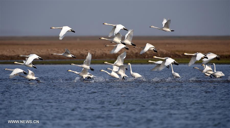 CHINA-HUNAN-EAST DONGTING LAKE-MIGRANT BIRDS (CN)